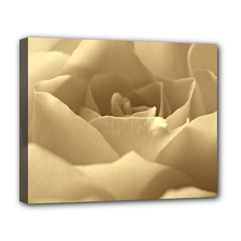 Rose  Deluxe Canvas 20  x 16  (Framed)