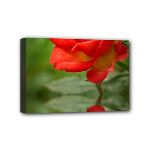 Rose Mini Canvas 6  X 4  (framed)