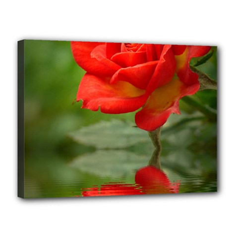 Rose Canvas 16  x 12  (Framed)