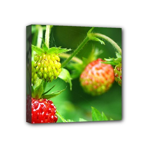 Strawberry  Mini Canvas 4  x 4  (Framed)