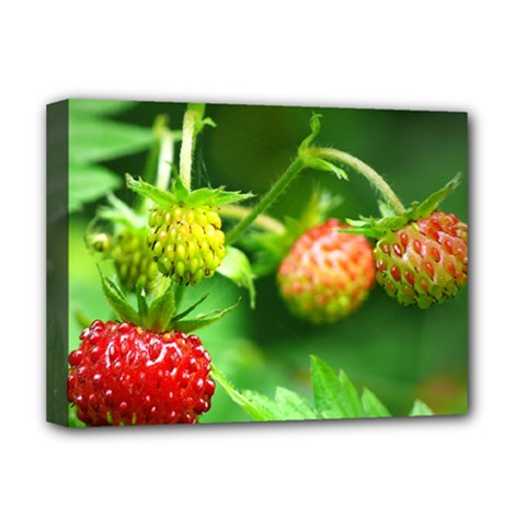 Strawberry  Deluxe Canvas 16  X 12  (framed)