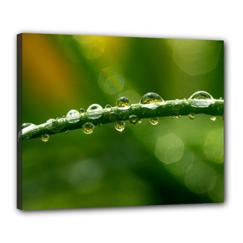 Waterdrops Canvas 20  X 16  (framed)