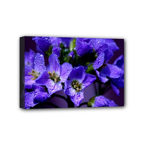 Cuckoo Flower Mini Canvas 6  x 4  (Framed)