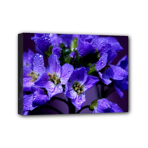 Cuckoo Flower Mini Canvas 7  X 5  (framed)