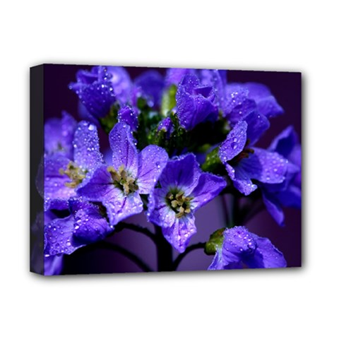 Cuckoo Flower Deluxe Canvas 16  x 12  (Framed)