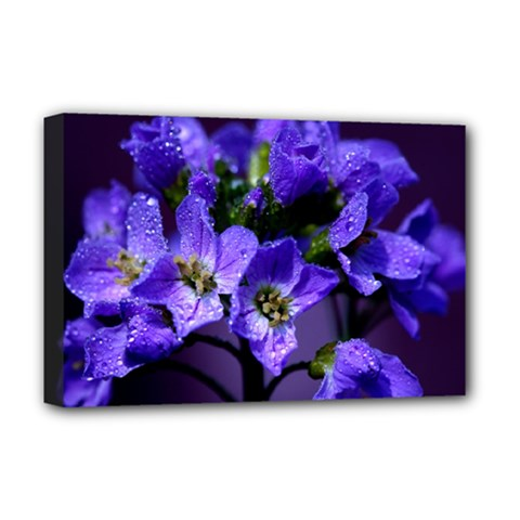 Cuckoo Flower Deluxe Canvas 18  x 12  (Framed)