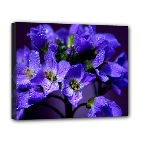Cuckoo Flower Deluxe Canvas 20  x 16  (Framed)