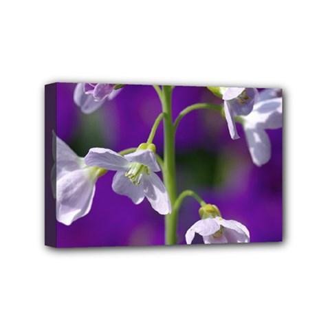Cuckoo Flower Mini Canvas 6  x 4  (Framed)