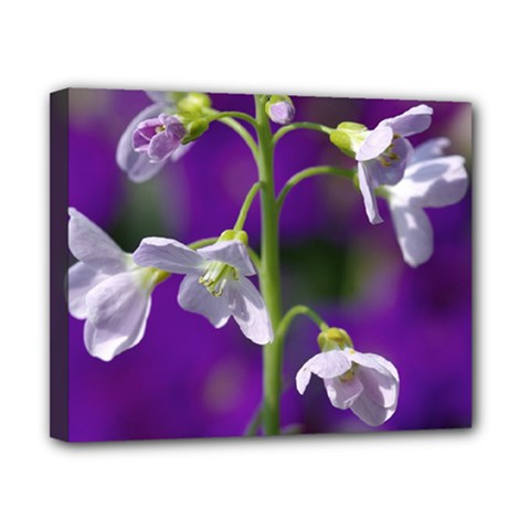 Cuckoo Flower Canvas 10  x 8  (Framed)