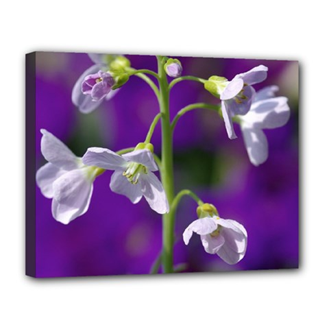 Cuckoo Flower Canvas 14  x 11  (Framed)