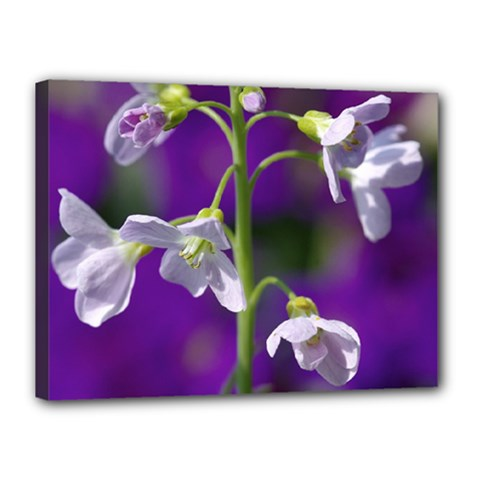 Cuckoo Flower Canvas 16  X 12  (framed)