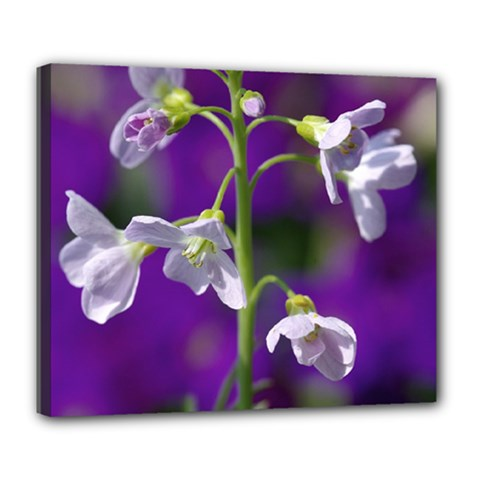 Cuckoo Flower Deluxe Canvas 24  x 20  (Framed)