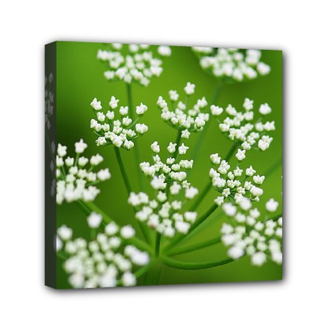 Queen Anne s Lace Mini Canvas 6  X 6  (framed)