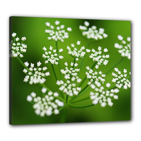 Queen Anne s Lace Canvas 24  x 20  (Framed)