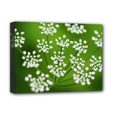 Queen Anne s Lace Deluxe Canvas 16  x 12  (Framed)