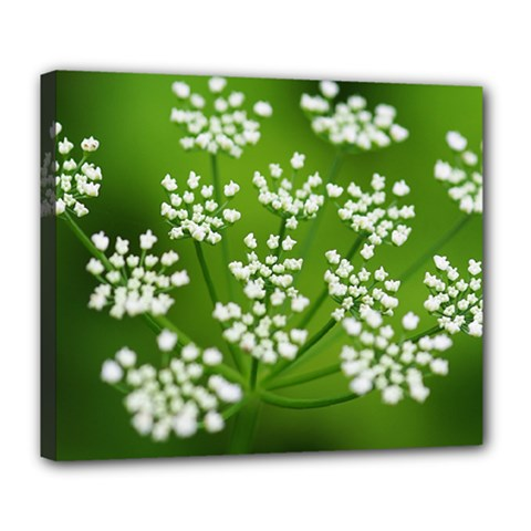 Queen Anne s Lace Deluxe Canvas 24  x 20  (Framed)