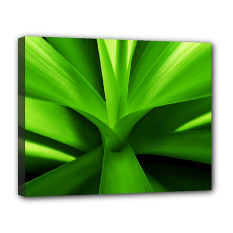Yucca Palm  Canvas 14  x 11  (Framed)