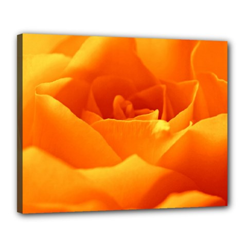 Rose Canvas 20  X 16  (framed)