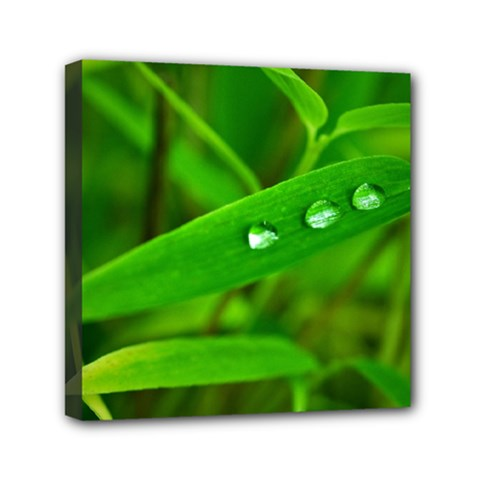 Bamboo Leaf With Drops Mini Canvas 6  X 6  (framed)