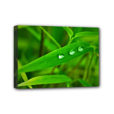 Bamboo Leaf With Drops Mini Canvas 7  X 5  (framed)