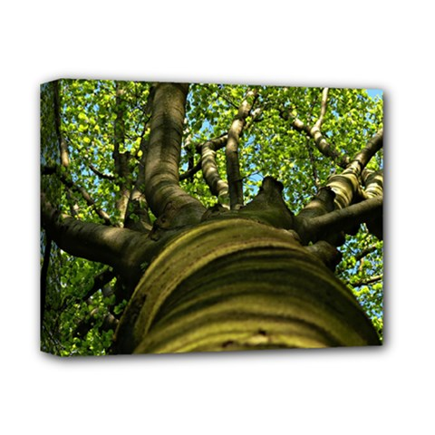 Tree Deluxe Canvas 14  x 11  (Framed)