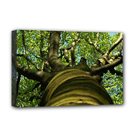 Tree Deluxe Canvas 18  x 12  (Framed)