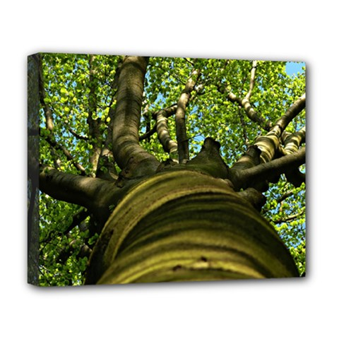 Tree Deluxe Canvas 20  X 16  (framed)
