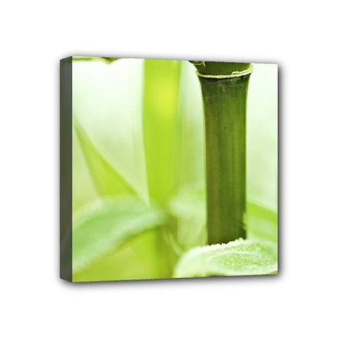 Bamboo Mini Canvas 4  X 4  (framed)