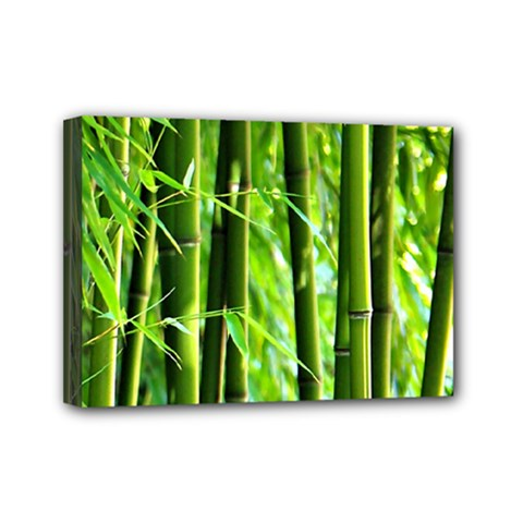 Bamboo Mini Canvas 7  X 5  (framed)