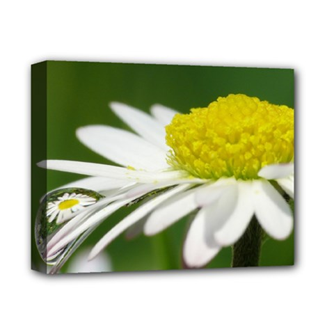 Daisy With Drops Deluxe Canvas 14  x 11  (Framed)