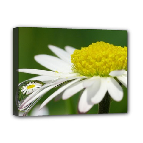 Daisy With Drops Deluxe Canvas 16  x 12  (Framed)