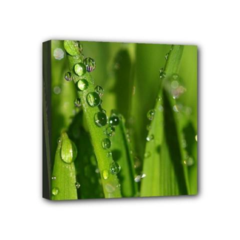 Grass Drops Mini Canvas 4  X 4  (framed)