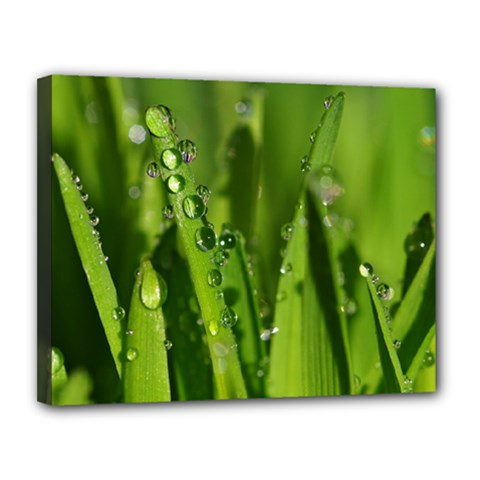 Grass Drops Canvas 14  x 11  (Framed)