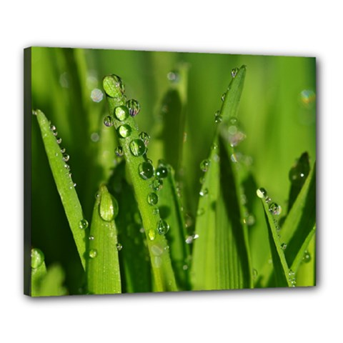 Grass Drops Canvas 20  x 16  (Framed)