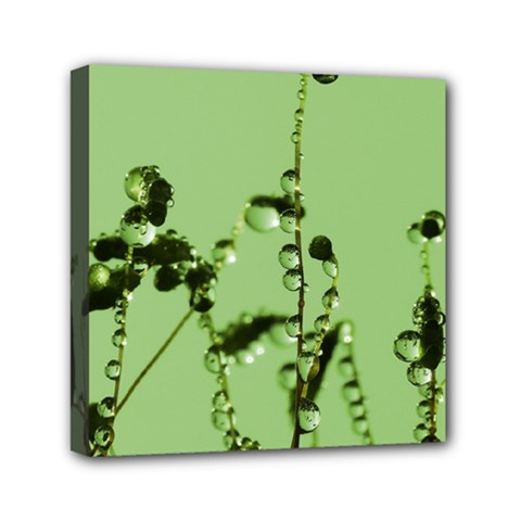Mint Drops  Mini Canvas 6  X 6  (framed)
