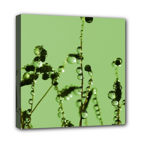 Mint Drops  Mini Canvas 8  x 8  (Framed)