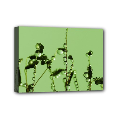 Mint Drops  Mini Canvas 7  x 5  (Framed)