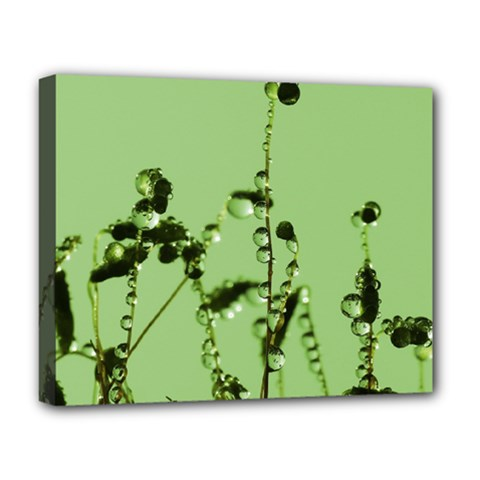 Mint Drops  Deluxe Canvas 20  X 16  (framed)