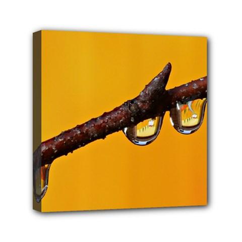 Tree Drops  Mini Canvas 6  X 6  (framed)