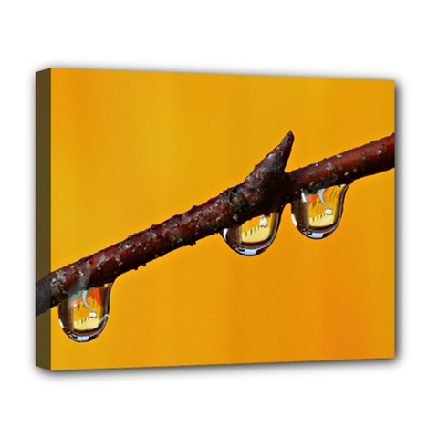 Tree Drops  Deluxe Canvas 20  x 16  (Framed)