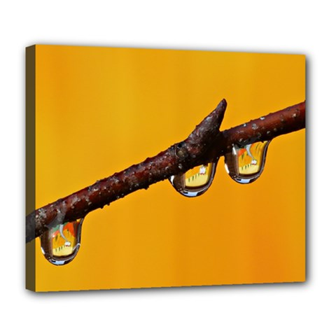 Tree Drops  Deluxe Canvas 24  X 20  (framed)