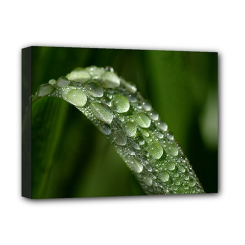 Grass Drops Deluxe Canvas 16  X 12  (framed)