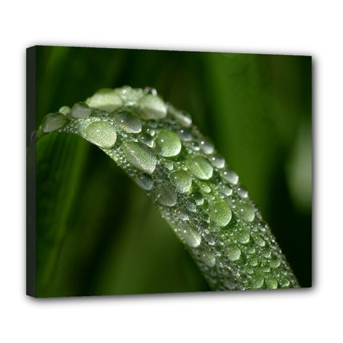Grass Drops Deluxe Canvas 24  x 20  (Framed)