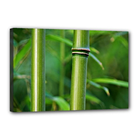 Bamboo Canvas 18  x 12  (Framed)