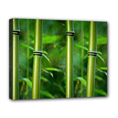Bamboo Canvas 14  x 11  (Framed)