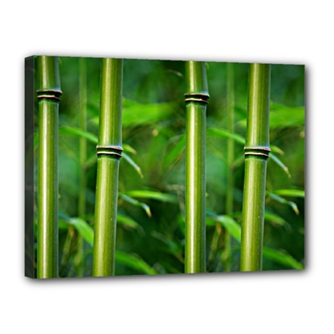Bamboo Canvas 16  x 12  (Framed)