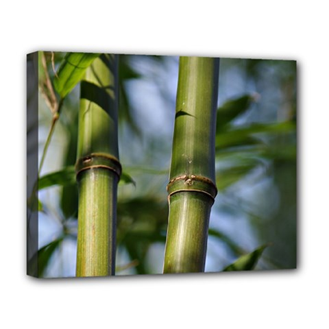 Bamboo Deluxe Canvas 20  x 16  (Framed)
