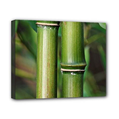 Bamboo Canvas 10  x 8  (Framed)