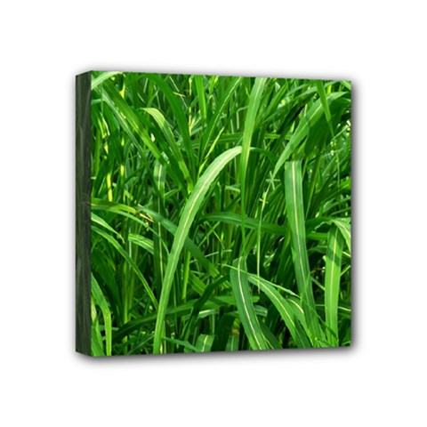 Grass Mini Canvas 4  x 4  (Framed)