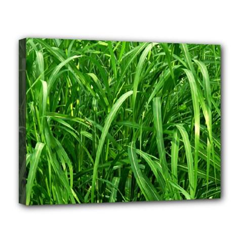 Grass Canvas 14  x 11  (Framed)